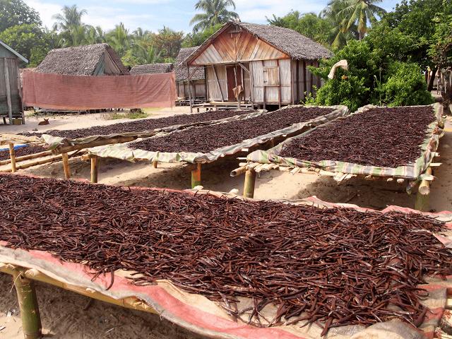 Sušenie vanilky na Madagaskare